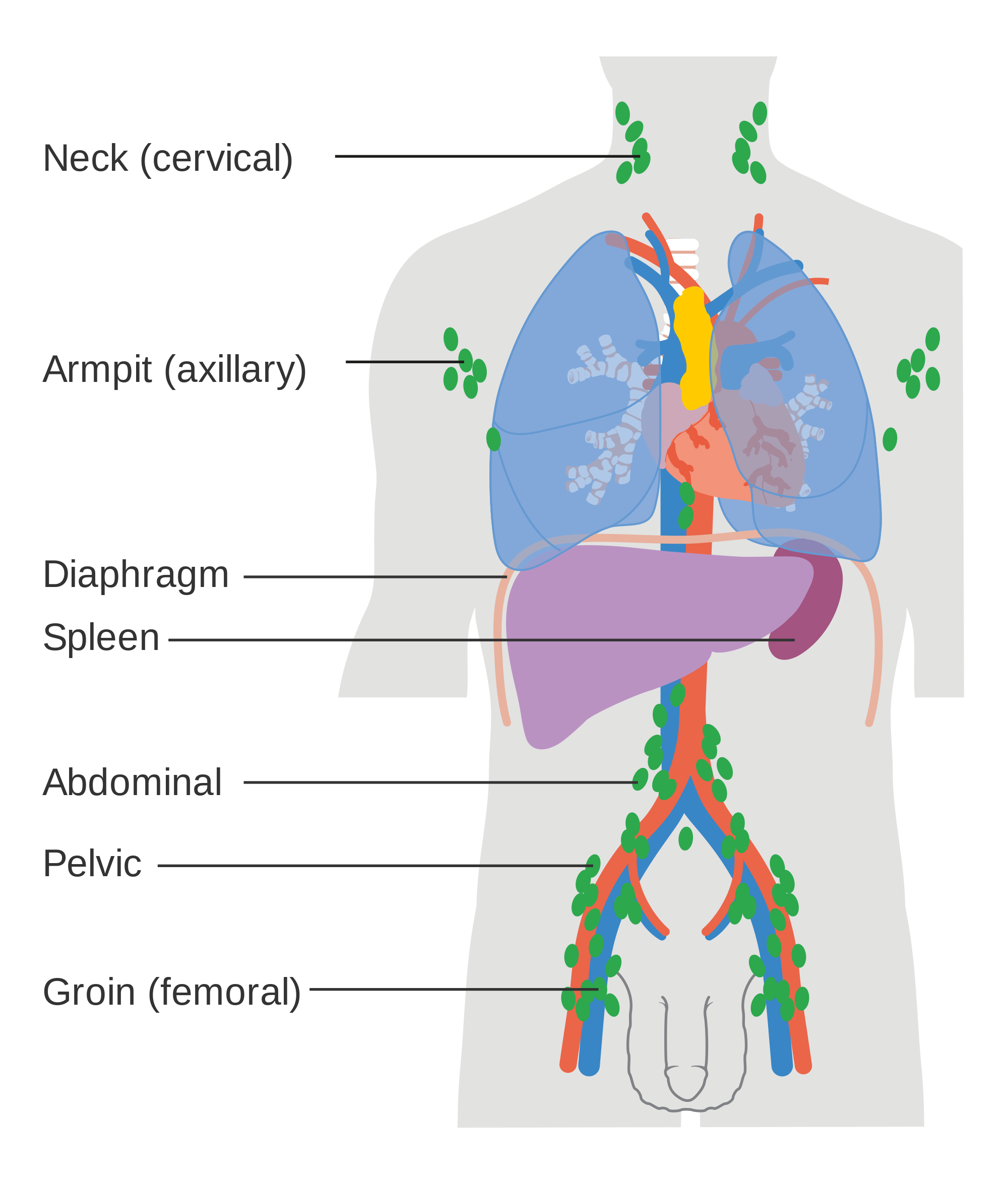 Oxygen for the Immune System